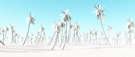 panoramic beach: Winter snow white palm beach landscape with blue sky.