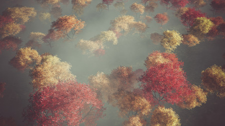 mist: Aerial of autumn forest in the mist. Stock Photo