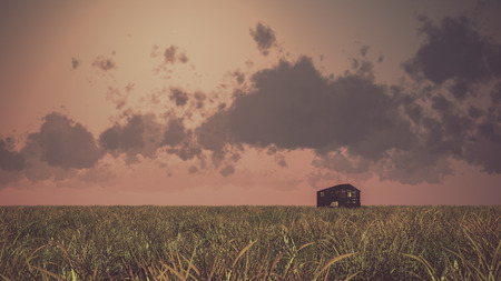 shack: Old abandoned wooden barn on prairie at sunset with cloudy sky.