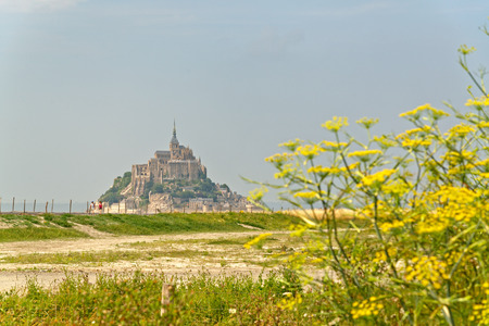 st michel: Scenic view passed a cluster of dainty yellow wildflowers of the tidal island of Mont St Michel, Normandy, France