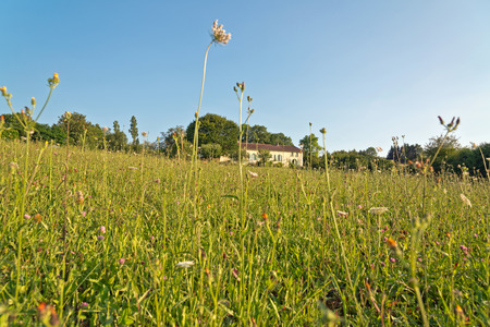 extensive: Extensive View of Green Grasses on the Ground on a Tropical Climate Under Light Blue Sky Stock Photo