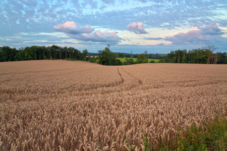 panoramic nature: Panoramic Nature View of Brown Hay Field Under Cloudy Sky Surrounded with Green Trees.
