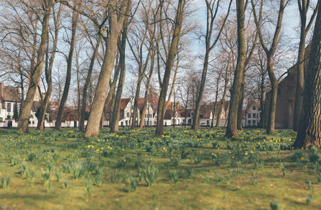 deciduous woodland: Stitched panorama of pretty spring flowers blooming in an urban park amongst leafless trees with a row of townhouses in the background