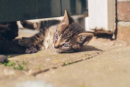 sunning: Little grey kitten with pretty blue eyes lying on paving sunning itself outdoors Stock Photo