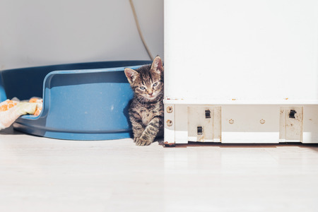 pussycat: Gray Tabby Pussycat Resting Beside his Blue Plastic Bed at the Corner Inside the House, Showing a Lonely Facial Expression. Stock Photo