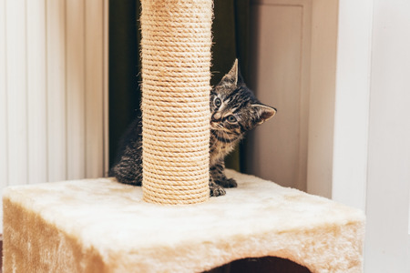 peering: Cute little kitten peering at the camera around the edge of its new rope scratching post Stock Photo