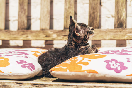 snuggling: Little kitten snuggling between colorful cushions laid out on a wooden garden bench looking up alertly into the air watching something Stock Photo