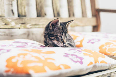 Little kitten resting on comfortable colorful cushions on a wooden garden bunch lying staring sleepily down at something below, close up of the head