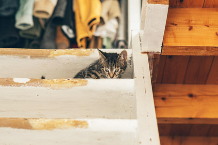 cowering: Small Tabby Kitten Cat Cowering on Wooden Stairs Near Ceiling Inside Home