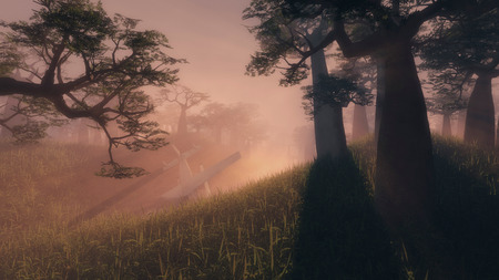 penetrating: Glowing rays of sunlight penetrating the early morning low lying mist in an eerie landscape of tall trees and lush vegetation Stock Photo