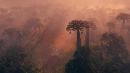shrouded: Aerial view of an eerie tropical forest at dawn with the tall trees shrouded in tendrils of mist lit by a glowing sun