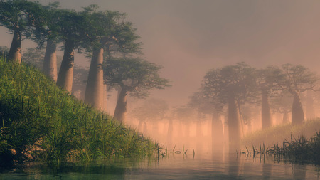 shrouded: Dawn over a wetland river with tall tropical trees shrouded in tendrils of low lying mist in a scenic atmospheric landscape with a golden glow Stock Photo