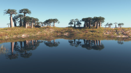copse: Stand of tropical trees reflected in the calm water of a lake under a clear sunny blue sky in a scenic panoramic landscape view, with copyspace