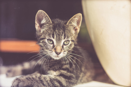 penetrating: Alert young grey striped tabby kitten lying on the floor peering through glass with an intent stare Stock Photo