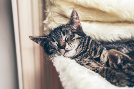 asleep chair: Adorable little tabby kitten lying fast asleep on a warm blanket covering a chair with its head resting on the side Stock Photo