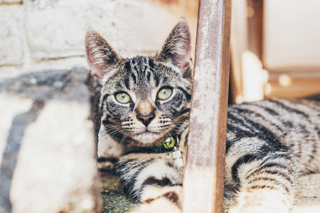 peers: Striped tabby cat lying watching the camera resting its head against a step as it peers around a wooden beam