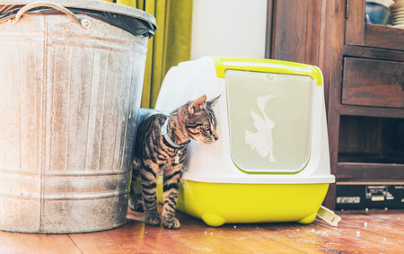 Striped grey tabby standing alongside a plastic covered litter box and garbage bin indoors in a house 스톡 콘텐츠
