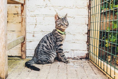 grey tabby: Alert striped grey tabby cat sitting watching the camera in front of a white brick wall and wire mesh grid
