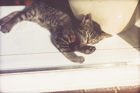 grey tabby: Comfortable tired little grey tabby kitty lying sleeping in the sunshine inside a glass door to the house
