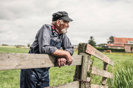 Elderly grey-haired bearded farmer leaning on a paddock fence watching his animals with farm buildings in the distance