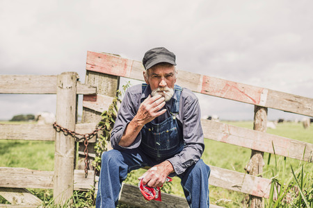 grizzled: Elderly farm worker sitting relaxing in the sunshine on a wooden fence surrounding a pasture with livestock