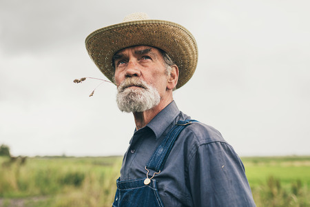 low  angle: Thoughtful senior farmer chewing grass while staring into the distance, low angle head and shoulders view against a grey sky Stock Photo