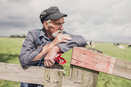 senior smoking: Senior farmer wearing a cloth cap standing smoking in a pasture with a herd of cows leaning on the fence looking at the camera