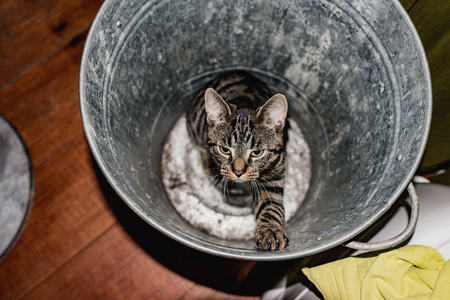 garbage bin: Young tabby cat sitting in empty garbage bin. High angle view. Stock Photo
