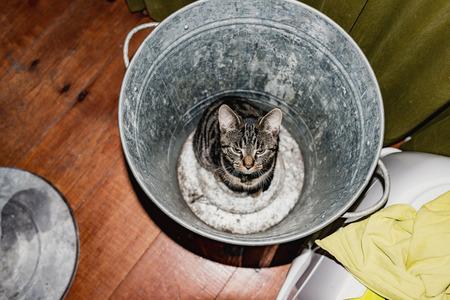 garbage bin: Young tabby cat sitting in empty garbage bin. High angle view. Foto de archivo