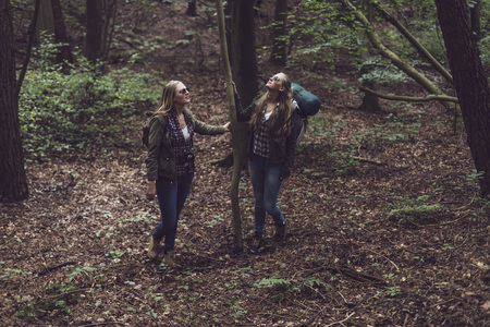 twin sister: Two twin sister holding tree in forest.