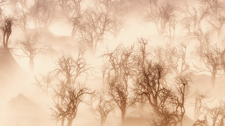 mist: Bare winter trees in thick layer of mist. Aerial view. Stock Photo