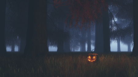 misty: Halloween pumpkin in misty fir tree forest at night.