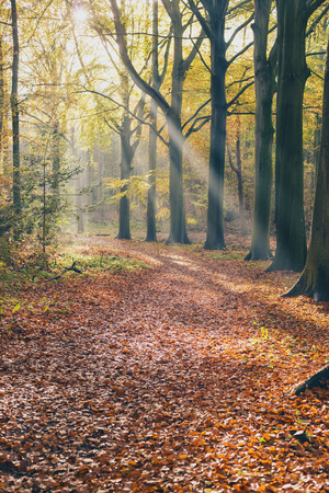 Sunbeam in foggy autumn forest.