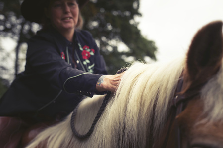 manes: Hand of woman stroking manes of horse. Face out of focus. Stock Photo