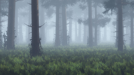 pine forest: Trunks in foggy pine forest.