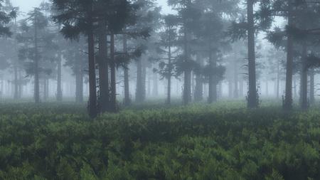 misty: Misty pinewood with fern ground.