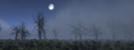 misty: Misty meadow with bare trees at moonlight. Stock Photo