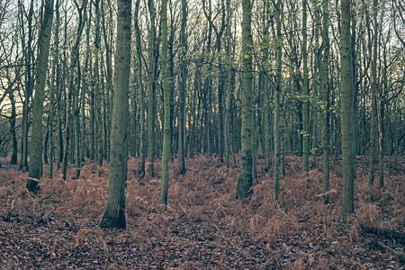helechos: helechos muertos en el bosque de oto�o. Foto de archivo