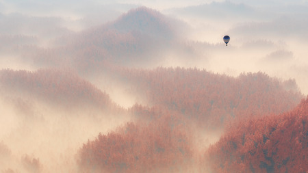 misty forest: Aerial of misty autumn pine tree forest with hot air balloon.