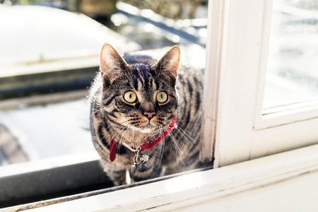 looking towards camera: Young cat looking through open sliding door. Stock Photo