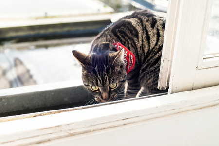 sniffing: Tabby sniffing in gutter.