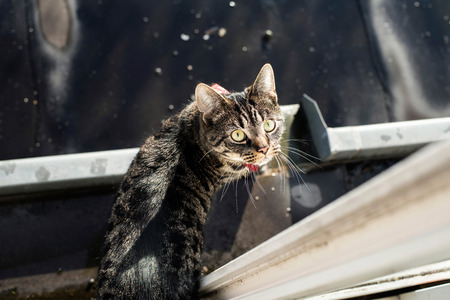 looking towards camera: Tabby standing in gutter looking up towards camera. Stock Photo