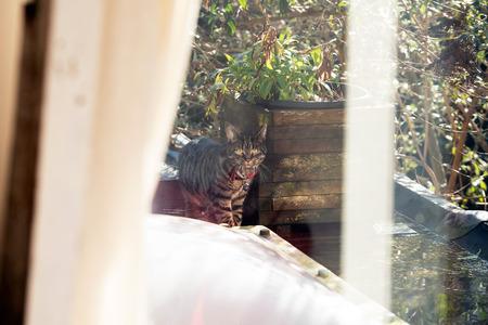 through window: Cat on roof looking through window.