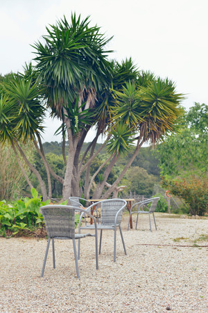 Chairs in garden with yucca tree. Mallorca. Spain.