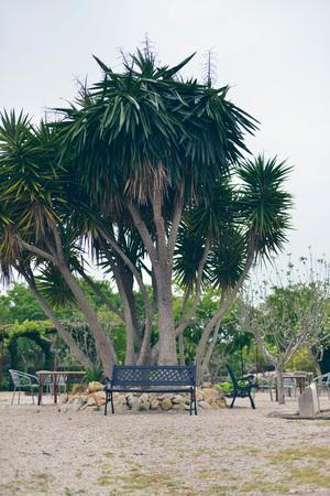 yucca: Bench under yucca tree in garden. Mallorca. Spain.