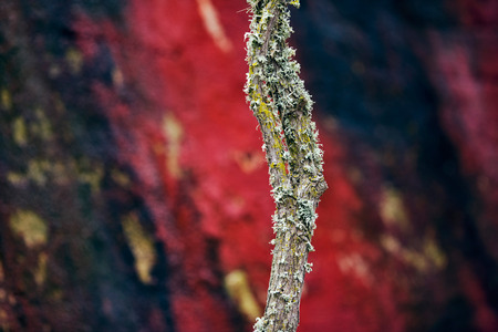 mosses: Tree bark with mosses against blurred wall in background