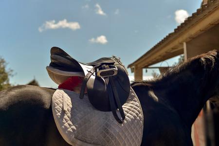 stirrup: Doing saddle on the back of a horse