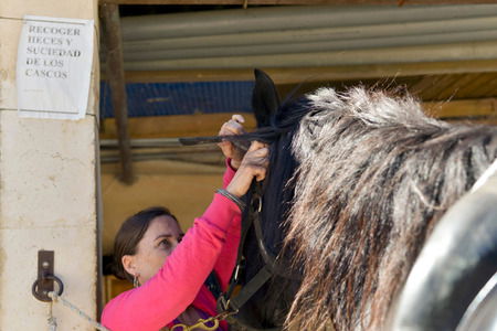 halter: Brunette woman putting on horse halter Stock Photo