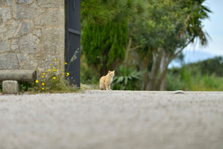 garden gate: Ginger cat sitting at garden gate. Majorca. Balearic island. Spain.