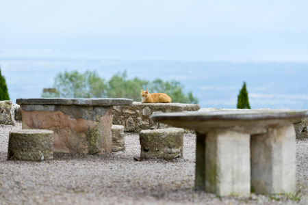 cat island: Ginger cat lying on stone wall in garden. Majorca. Balearic island. Spain.